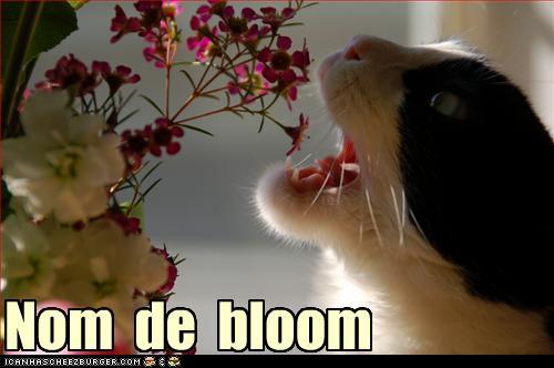 Nom de bloom